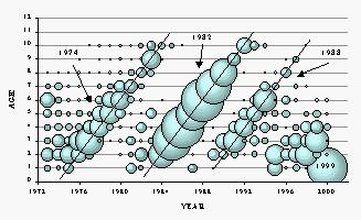 Mackerel catch at age, 1973-2000