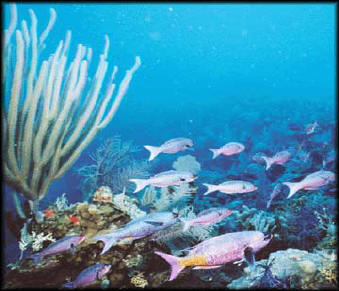 Coral reef fish - NOAA