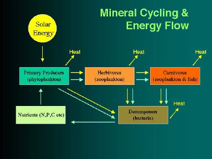 Typical energy and nutrient flow diagram